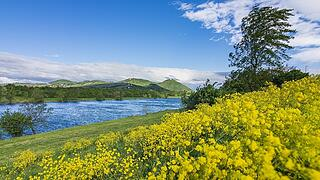 flowering meadow, river Neue Donau (New Danube), island Donauinsel, view to mountains Kahlenberg and Leopoldsberg Wien,