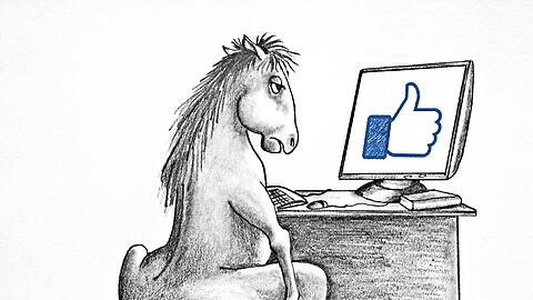 Horse sitting at the table with computer. Allegory hard work. Wo