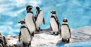 group of funny penguins