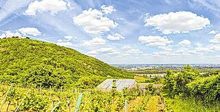 View of the Danube of Vienna from Kahlenbergerdorf